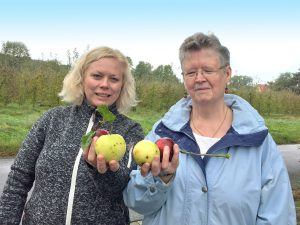 Es sind nur ein paar der vielen Äpfel, die Parea-Mitarbeiterin Anja Nogaitzig (l.) und Gudrun Stephan mit ihrer Gruppe auf der Apfelwiese in Roleber geerntet haben. Die Früchte werden zu verschiedenen Köstlichkeiten weiterverarbeitet.