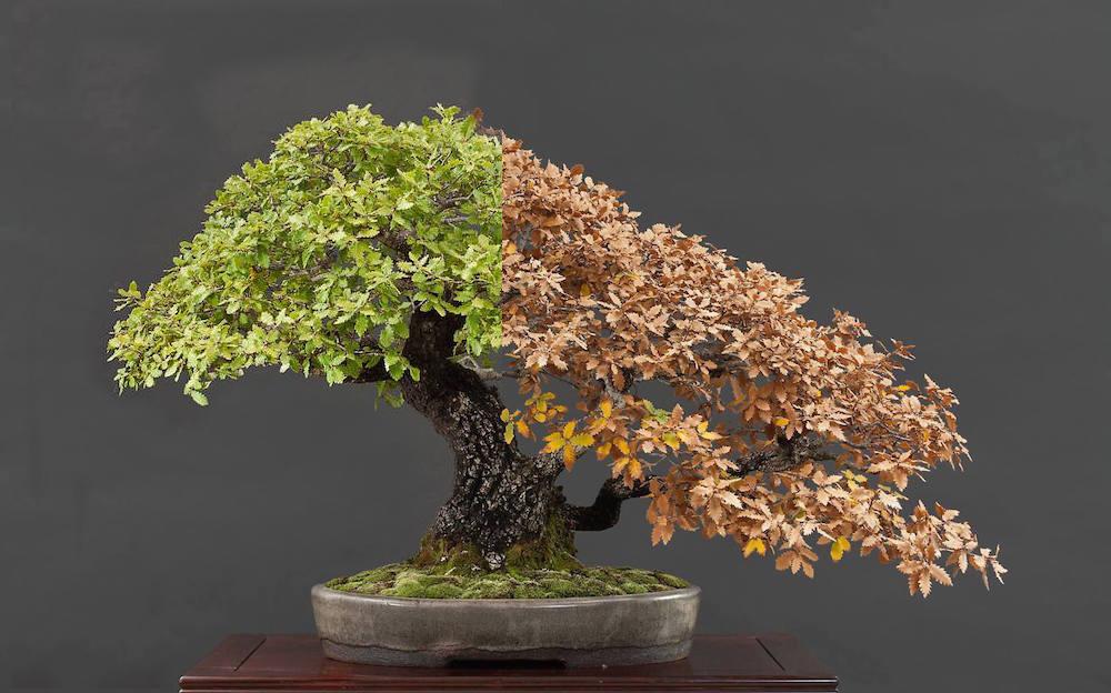 Choosing A Bonsai Pot For Your Tree Bonsai Empire