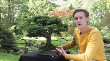 Learn more about bonsai and the rich history that comes with it. Where To Find Bonsai Trees For Sale Bonsai Empire