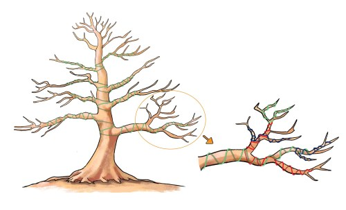 small resolution of wiring bonsai trees to shape and bend the branches bonsai empire wiring a bonsai tree illustration