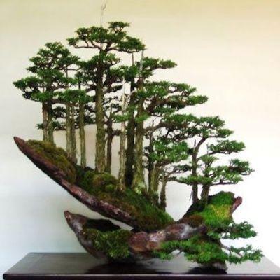 Top 8: Atemberaubende Felsen-Bonsai - Bonsai Empire