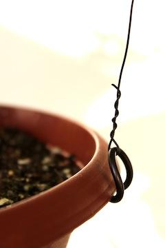 bonsai tensor