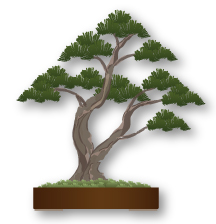 Estilo Bonsai Sokan, doble tronco, troncos