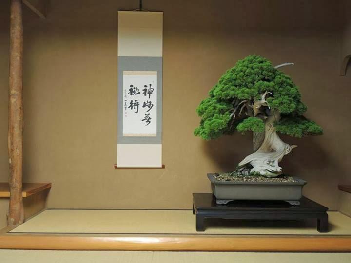 Top 5 Bonsai i pi vecchi  Bonsai Empire