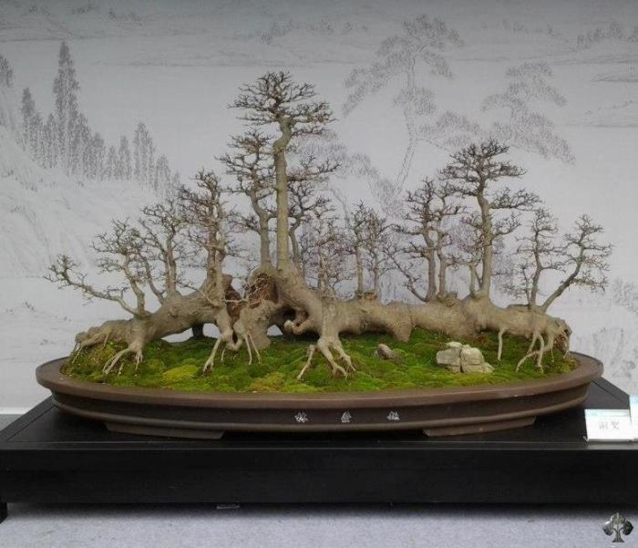 Top 10 gli alberi Penjing cinesi  Bonsai Empire
