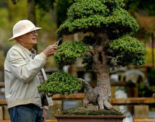 Bonsai Size Classification Chart And Guide Bonsai Sanctum