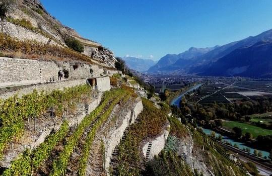 vignoble suisse