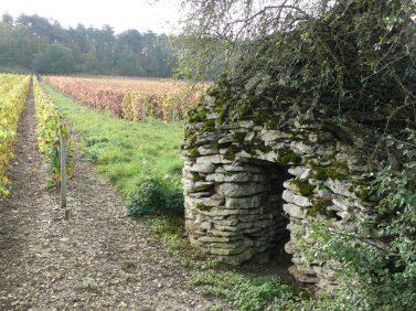 vignobles des chemins de Compostelle