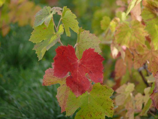 vins biodynamie