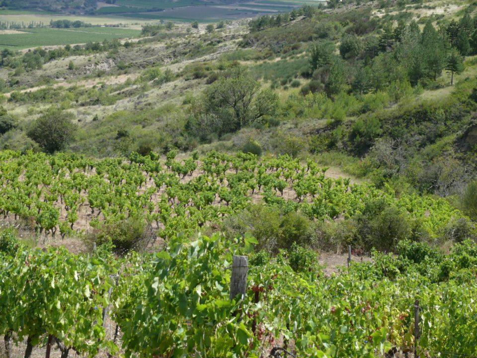 vins bio en Corbières Stéphane Madiec