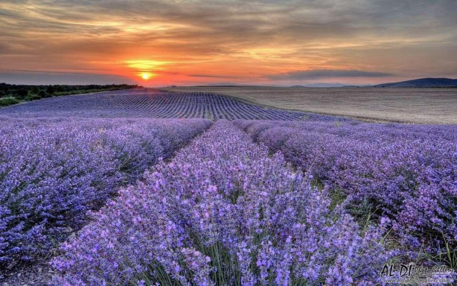 Bulgaria, world famous for Rose oil and Lavender oil!