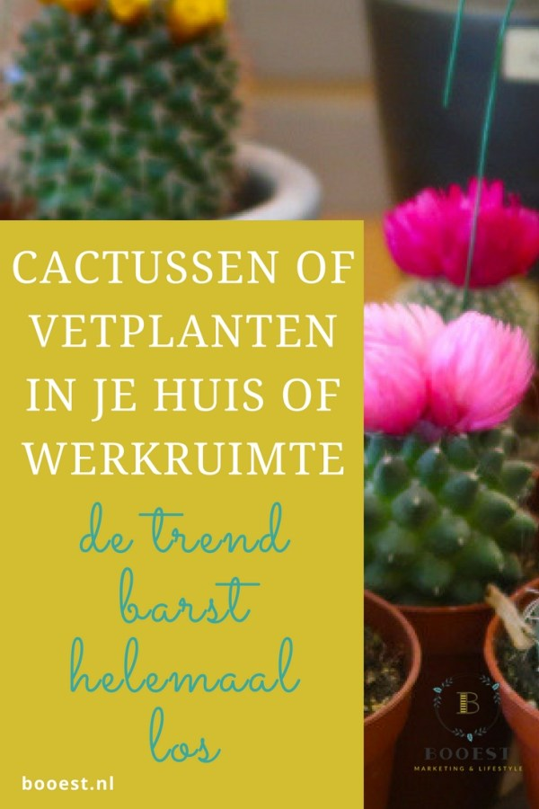 Cactussen en vetplanten in je huis of werkruimte. Velen hebben een haat-liefde verhouding met cactussen. Toch barst in 2017 de trend van cactussen in je huis helemaal los. Laat je verleiden! www.booest.nl/cactussen-en-vetplanten-in-huis-en-werkruimte