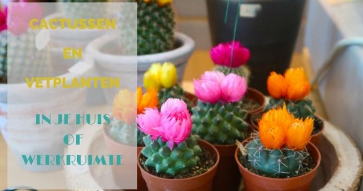 Cactussen en vetplanten in je huis en werkruimte