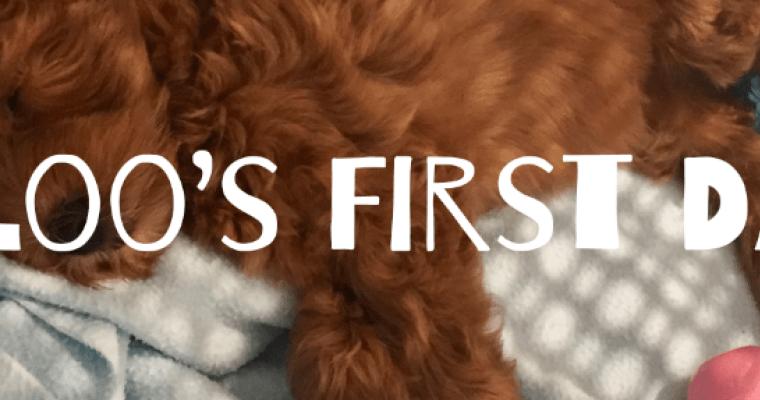 Puppy Comes Home