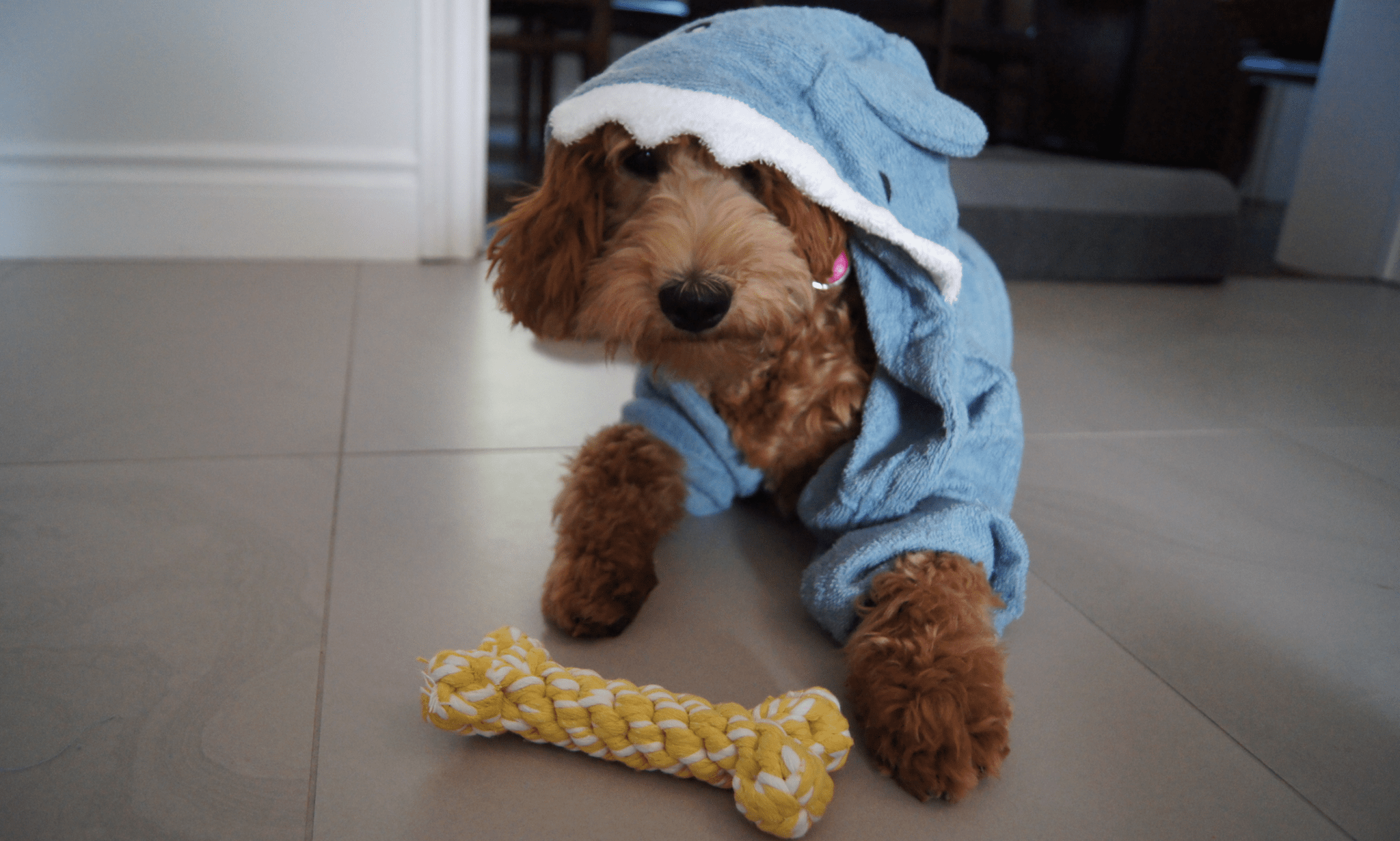 How to Keep A Smart Dog Occupied With Minimal Effort