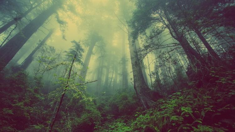 Vi è un incanto nei boschi senza sentiero. lord byron