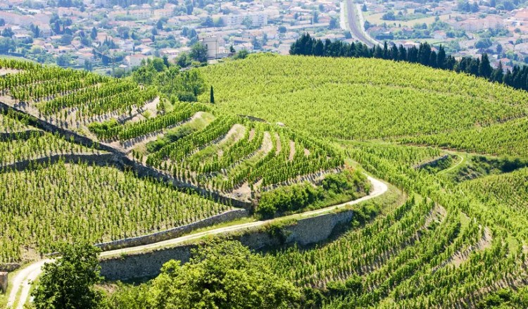 Auvergne Rhone Alpes Terraced Vine Yards