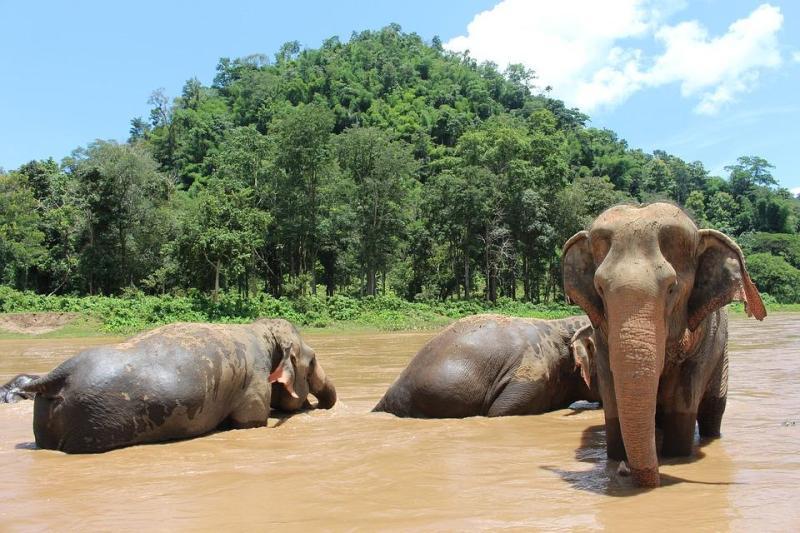 Elephants at Khao Sok National Park