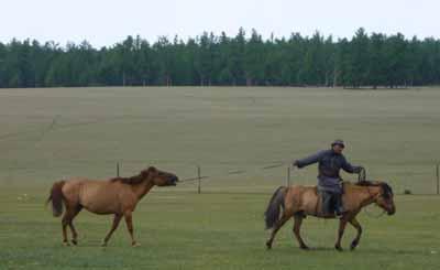bookblast mongolia cowboy