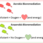 Aerobic and Anaerobic – Energy Systems