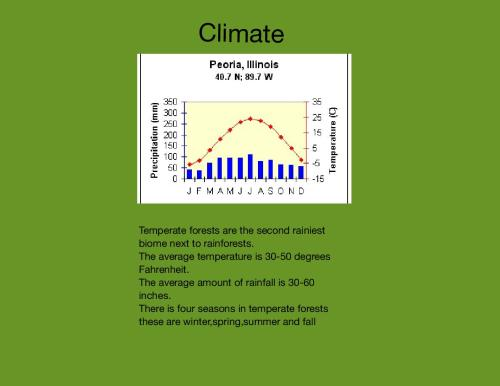 small resolution of diagram of the temperate forest