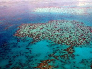 Great Barrier Reef | Book FHR Travel Blog