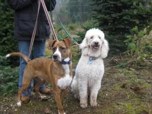 lissa manley dogs