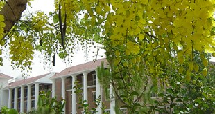 Agricultural Institutes in Pakistan