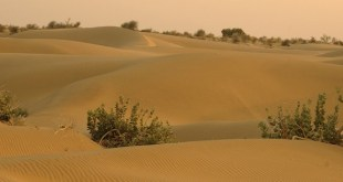 deforestation and desertification in pakistan and climate change