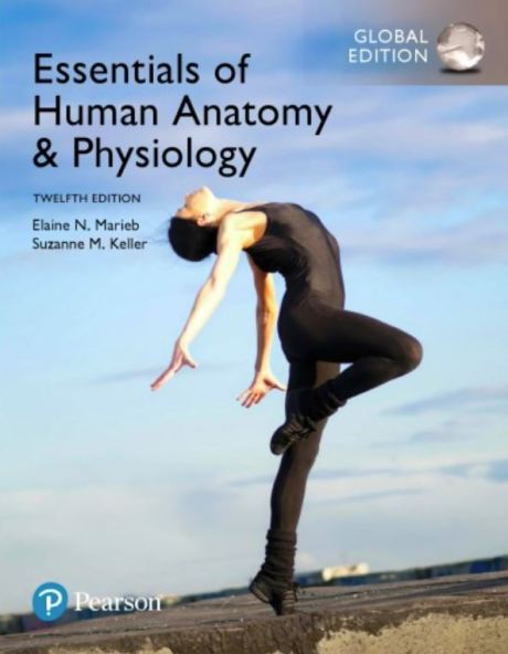 Essentials of Human Anatomy and Physiology 12th Edition pdf