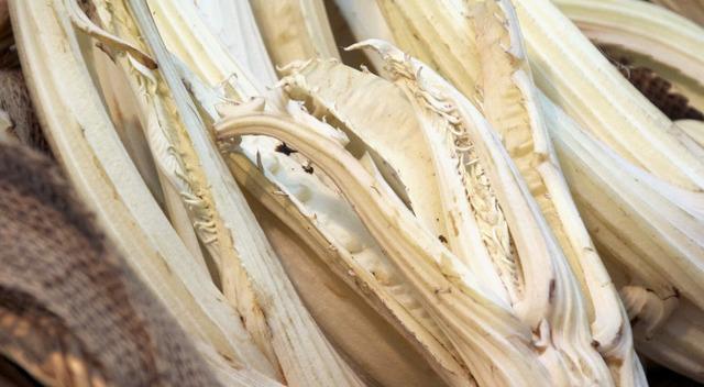 """Il cardo gobbo, tipico di Nizza Monferrato: """"re"""" della bagna cauda"""