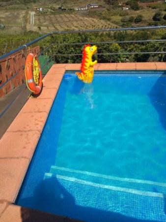 Pool, darin ein aufblasbarer Saurier
