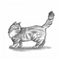Jonell_Cat200