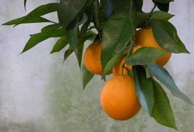 ph_oranges