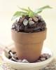 ph_dirt_cupcakes