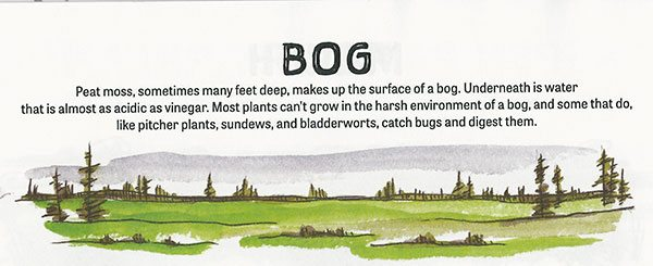 Bog, One North Star