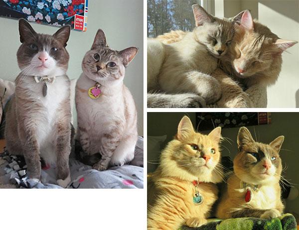 Trudi Trueit's cats