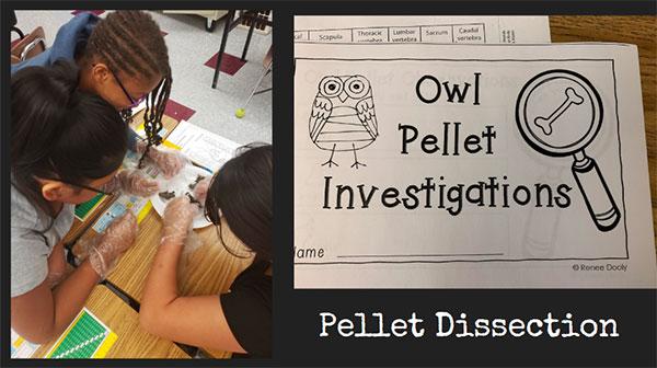 Owl Pellet Investigations