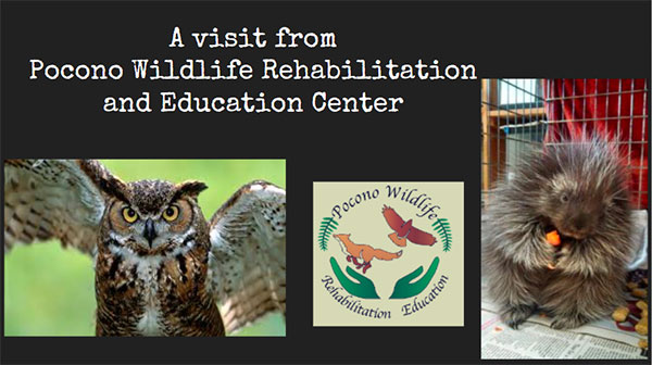 Pocono Wildlife Rehabilitation and Education Center
