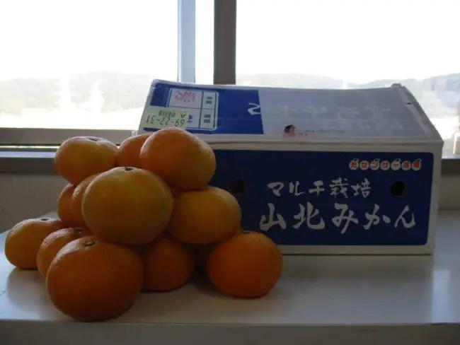 2020秋♪高知倉庫からの季節のお便り♪山北みかん♪