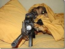 Guard dog 5