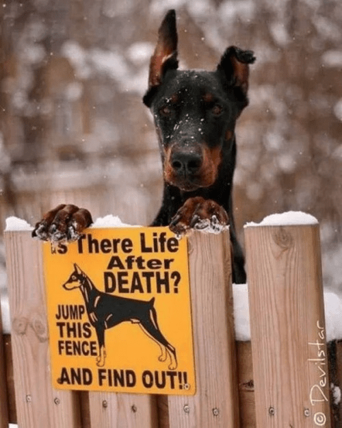 Doberman challenges people to find out if there's life after death