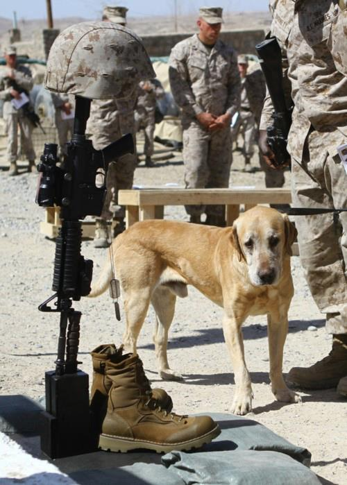 Dog and soldiers boots and guns