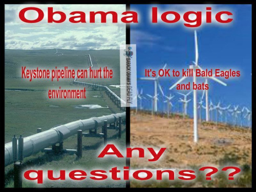 Obama logic on environment keystone windmills dead birds and bats