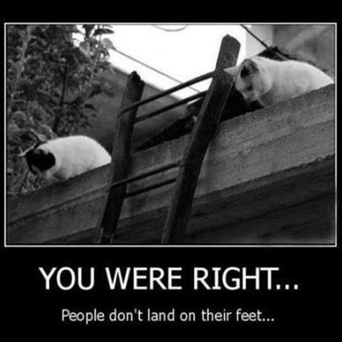 Cats people don't land on their feet
