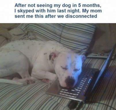 Dog and Skype