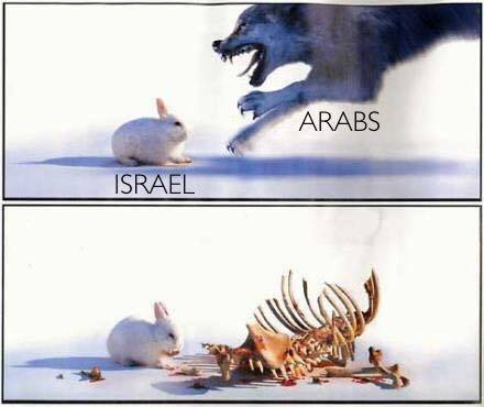 Israel the rabbit that eats wolves