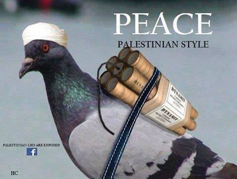 Peace pigeon Palestinian style