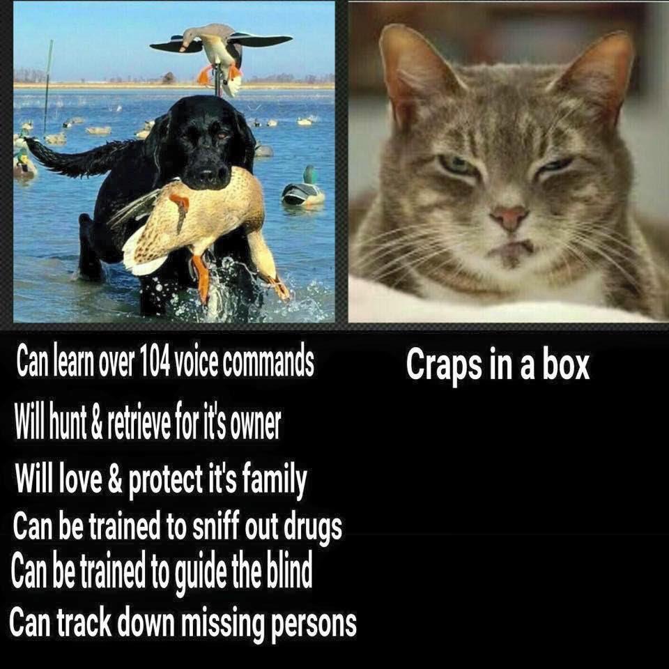 Cat In Small Box Meme