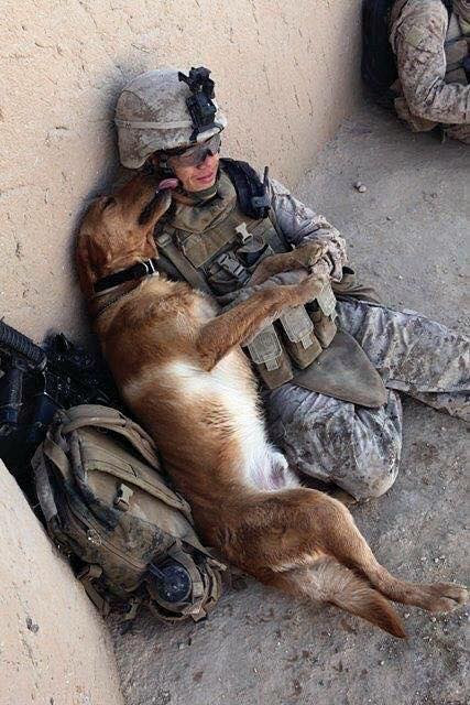 Troops and dogs 17